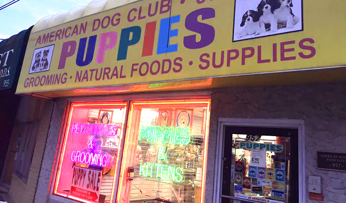 puppies store 1